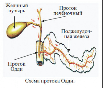 Код здоровья от Шишовой1