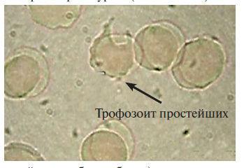 Код здоровья от Шишовой12