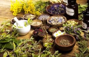 Лекарственные растения в оздоровительной практике